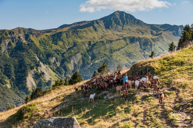 L'été, Caroline sillonne son alpage avec son troupeau de chèvres.